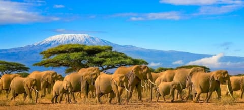 Why You Need To Visit Kenya