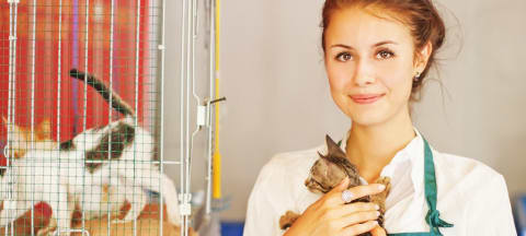 What Do Prospective Law Students Need to Know About Animal Welfare Law?