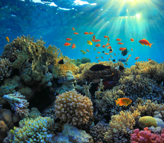 How Students are Helping to Save Coral Reefs