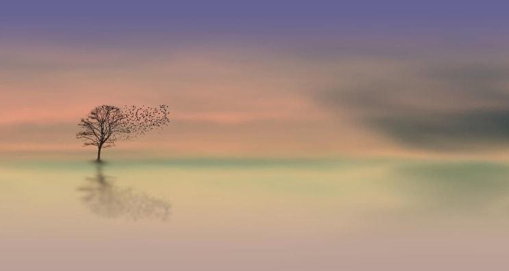 dawn, tree, dusk