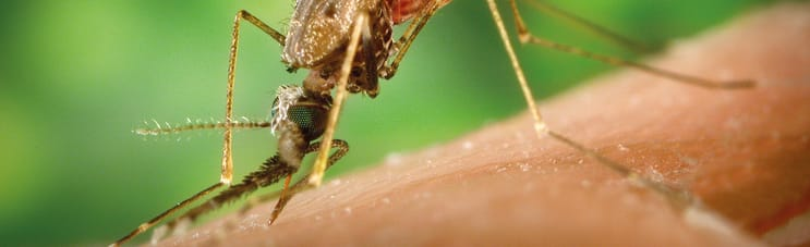 127171_BiomedicalSciencesITD_Fotofiche_1180op361_Anopheles_albimanus_mosquito.jpg