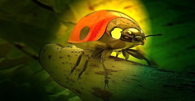 ladybug, beetle, lucky charm