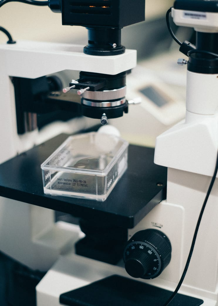 A stem cell culture being looked at under a microscope.