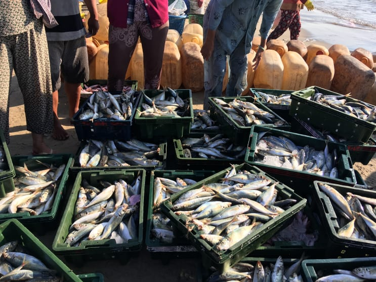 Fresh fish sorting from sea and sell in local market
