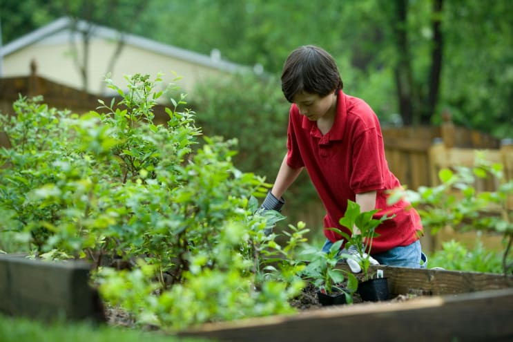 In so many ways, gardening is a very beneficial activity, not only for the environment, but for those who partake in this exercise. While wearing protective gloves, this boy was enjoying the fresh outdoor air, as he was planting what appeared to be vegetables in his raised-bed home garden.
