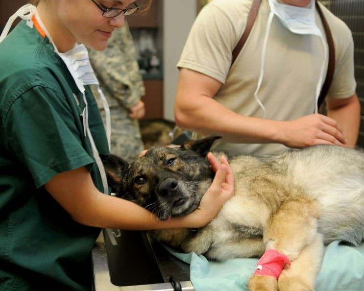 veterinary, clinic, veterinarian