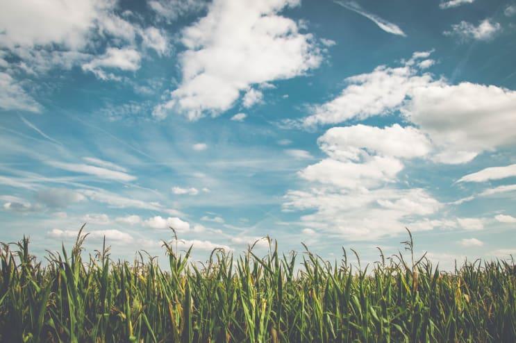 148813_field-corn-air-frisch-158827.jpeg