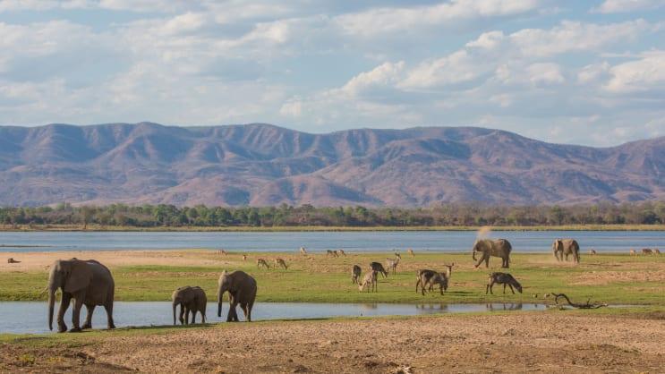 Wildlife in Zimbabwe