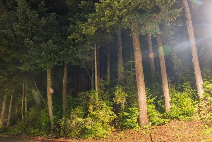 الغابة