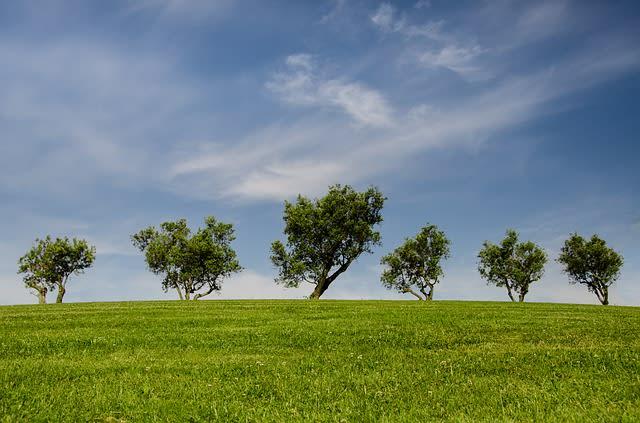 66557_trees-790220_640.jpg